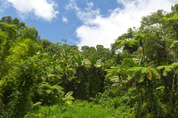아마존 밀림 - GIB 제공